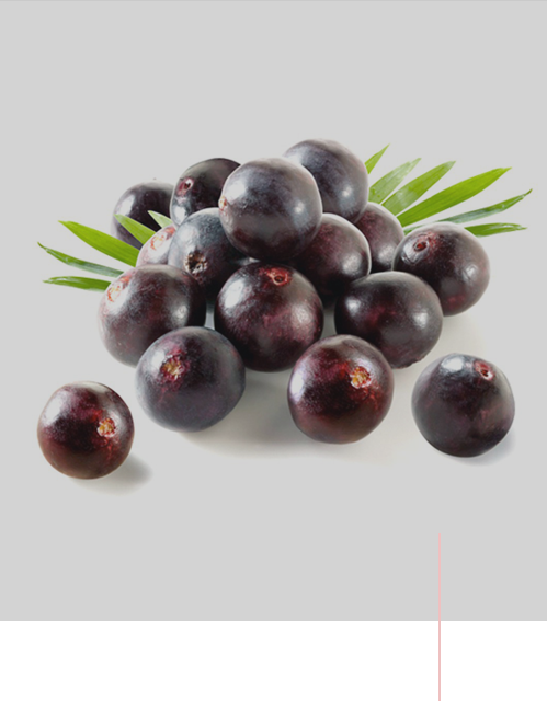 Superovoce - ACAI BERRY (Euterpe oleracea)